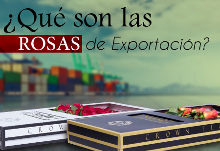 rosas exportacion